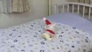 サンタ姿の桜田さくらがモテない男子を慰める!無修正動画
